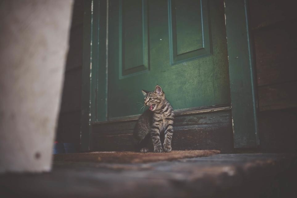un gatto che miagola davanti alla porta