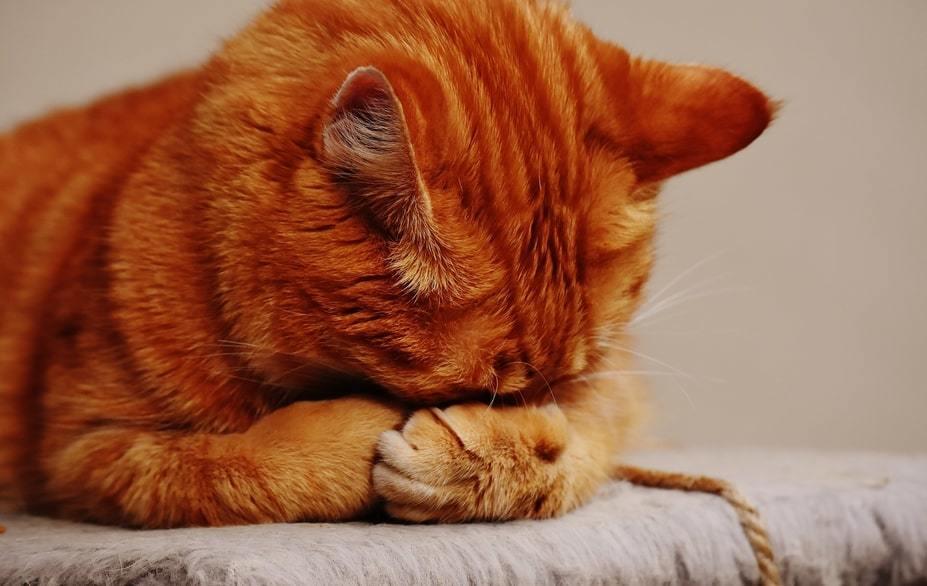 gatto lettiera chiusa