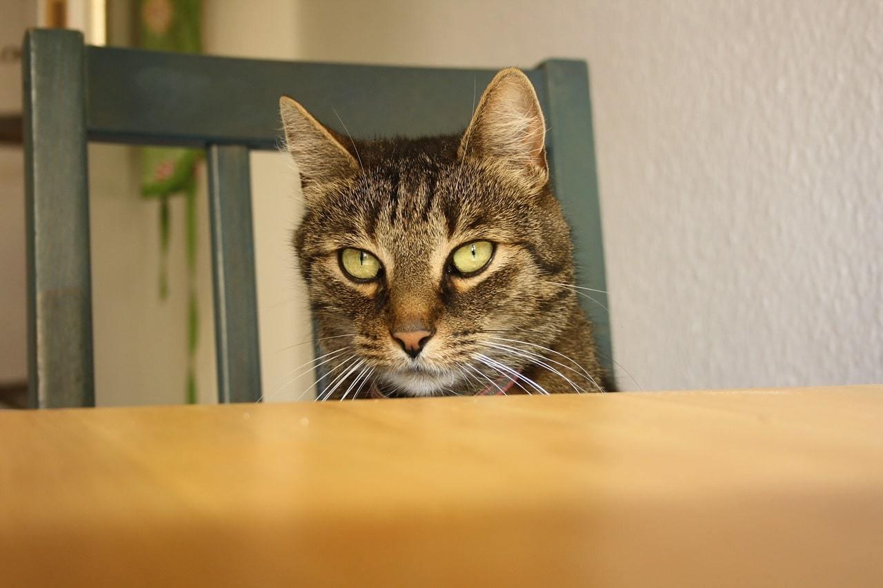 come evitare che il gatto salga sui mobili