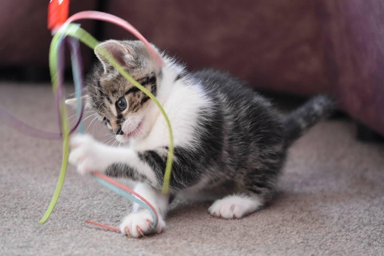 gatto che gioca