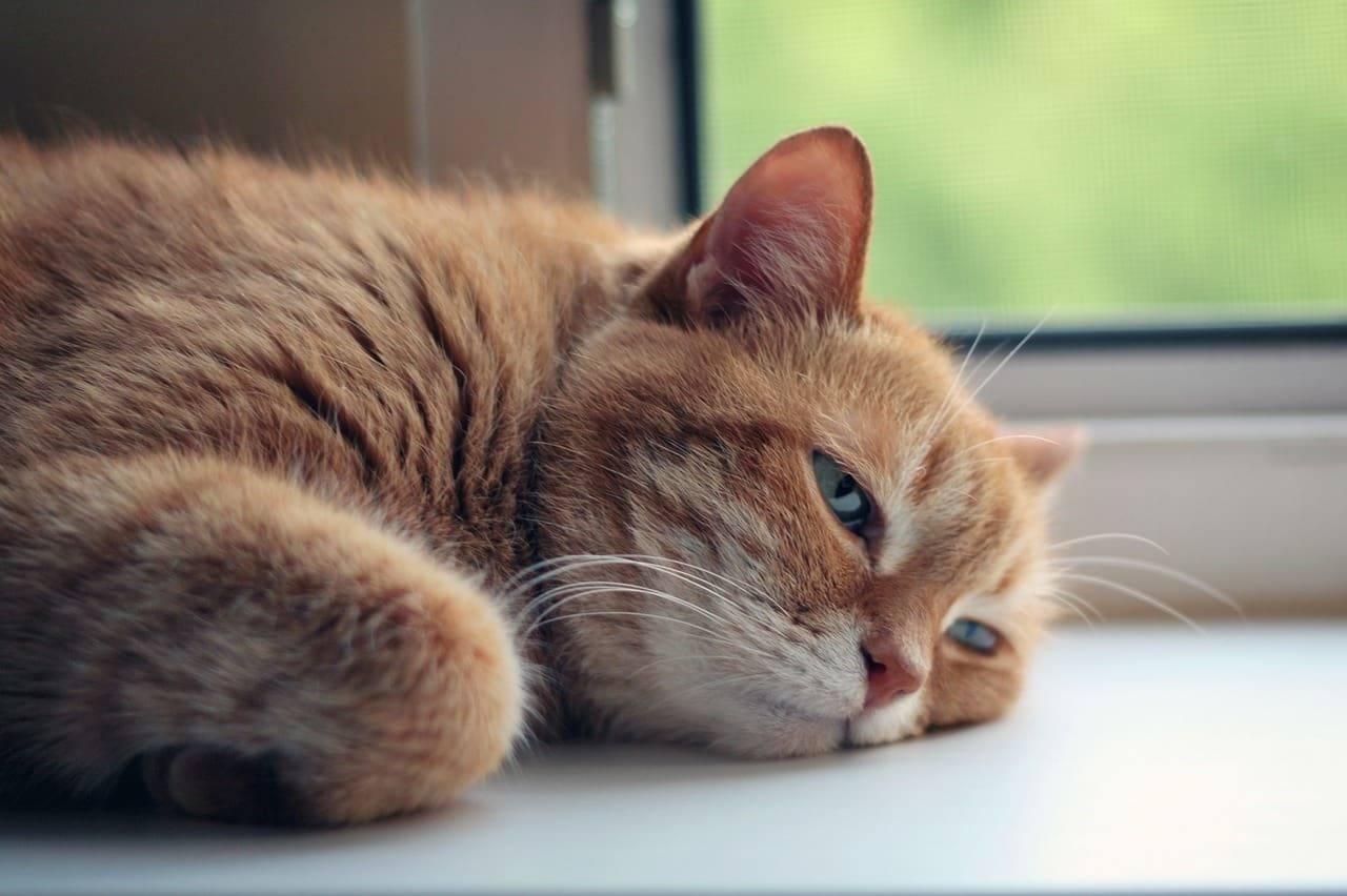 gatti e caldo