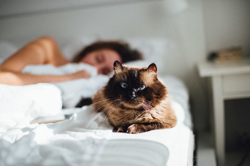 gatto che dorme a letto con il padrone