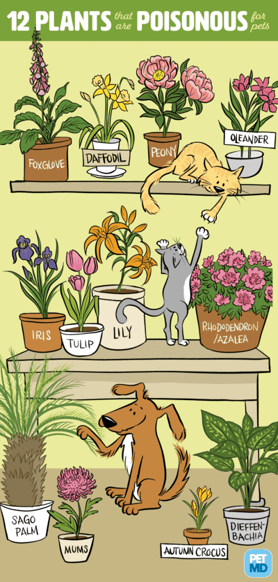 infografica piante velenose per i gatti