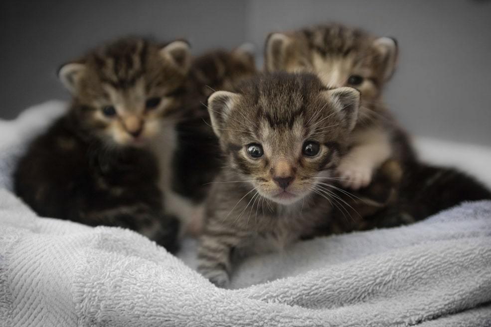 adottare un gattino
