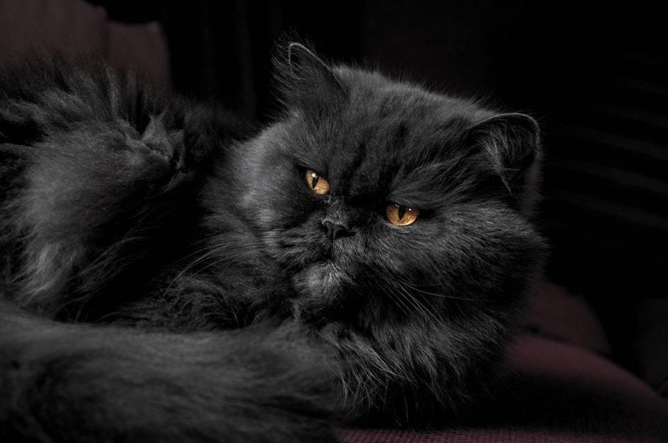 nome da dare a un gatto nero
