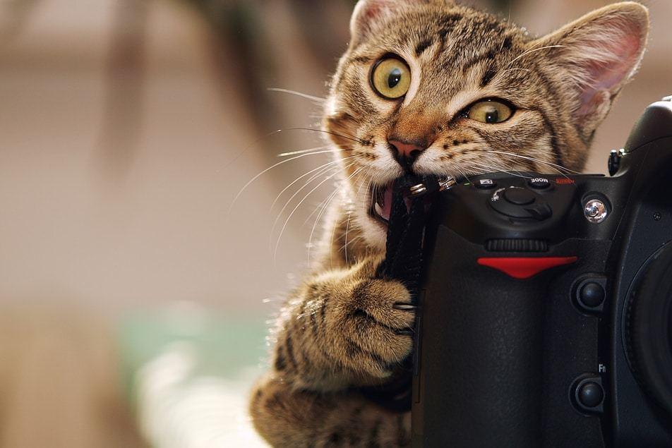 Un gatto che morde