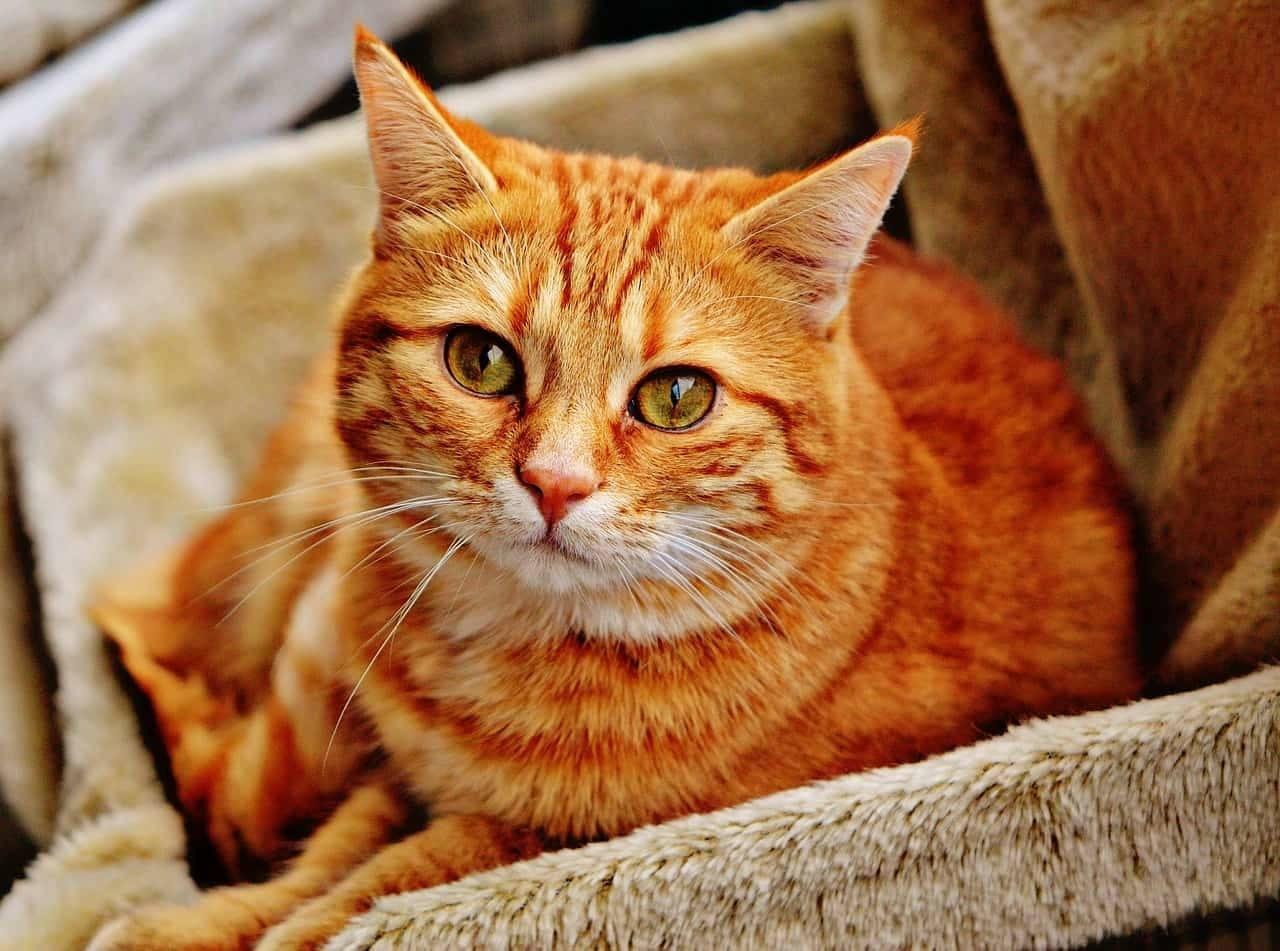Nell'articolo ti spiego come educare un gatto