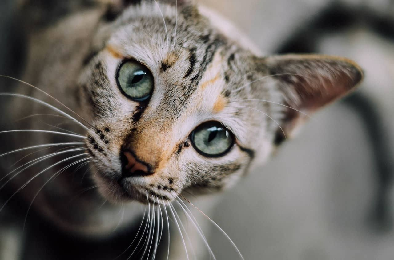 il gatto fa la pipì dappertutto in casa