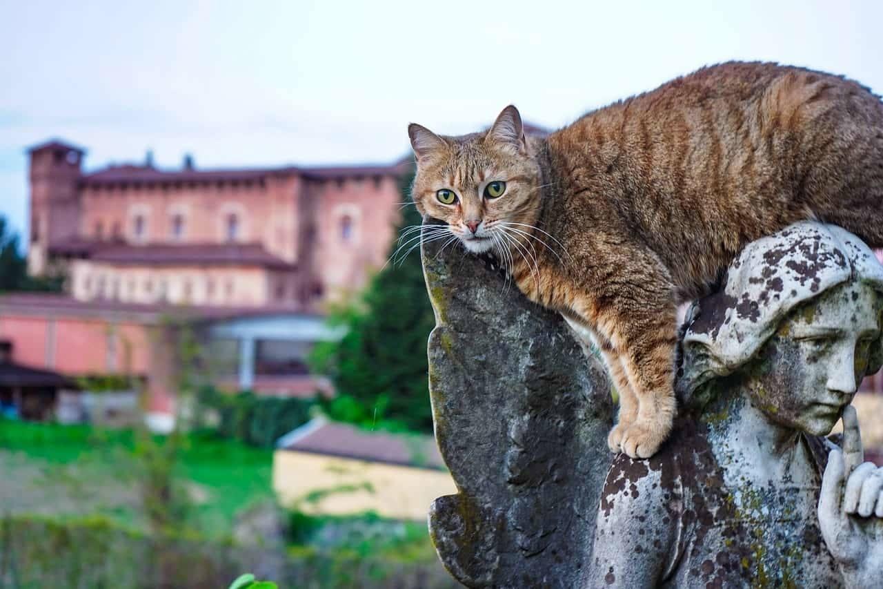 Elenco di nomi per gatti femmine italiani