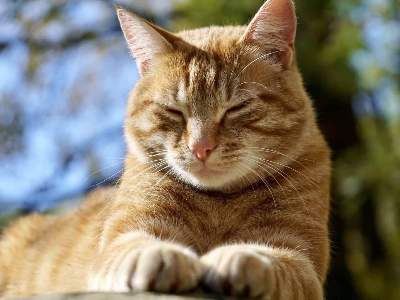 lista di nomi per gatti rossi femmine