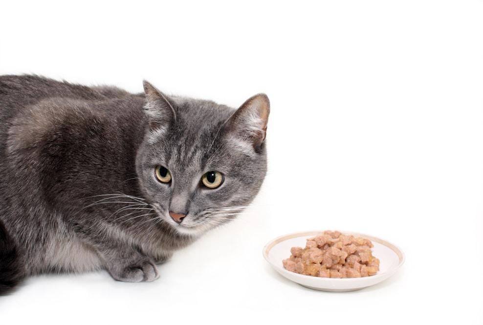 cibo umido per gatti