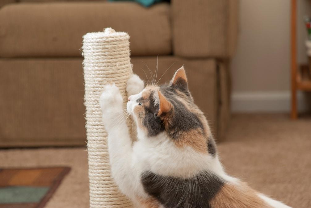 come proteggere il divano dai graffi del gatto