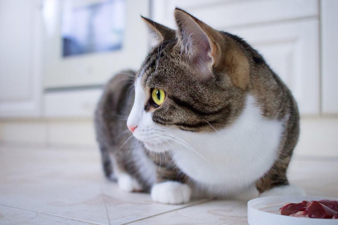 dispenser di cibo per gatti