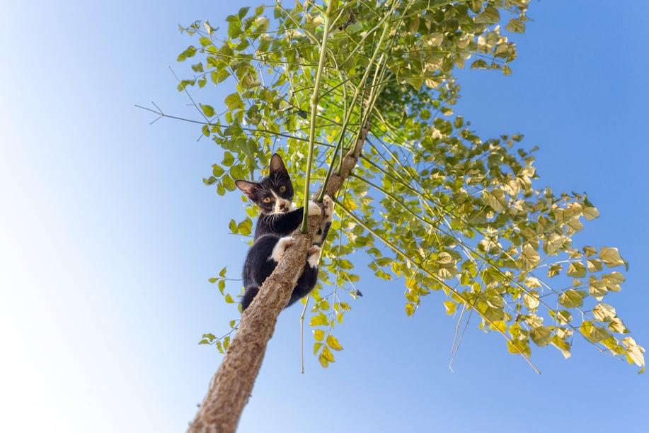 gatto impaurito sale su un albero