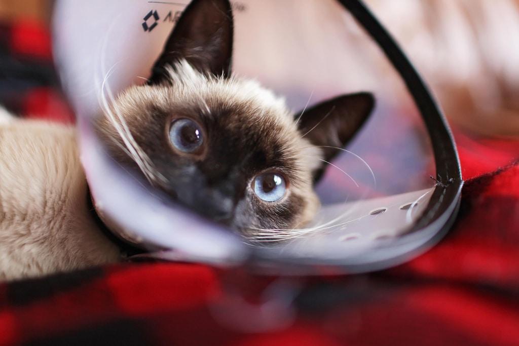 gatto perde il pelo rimedi
