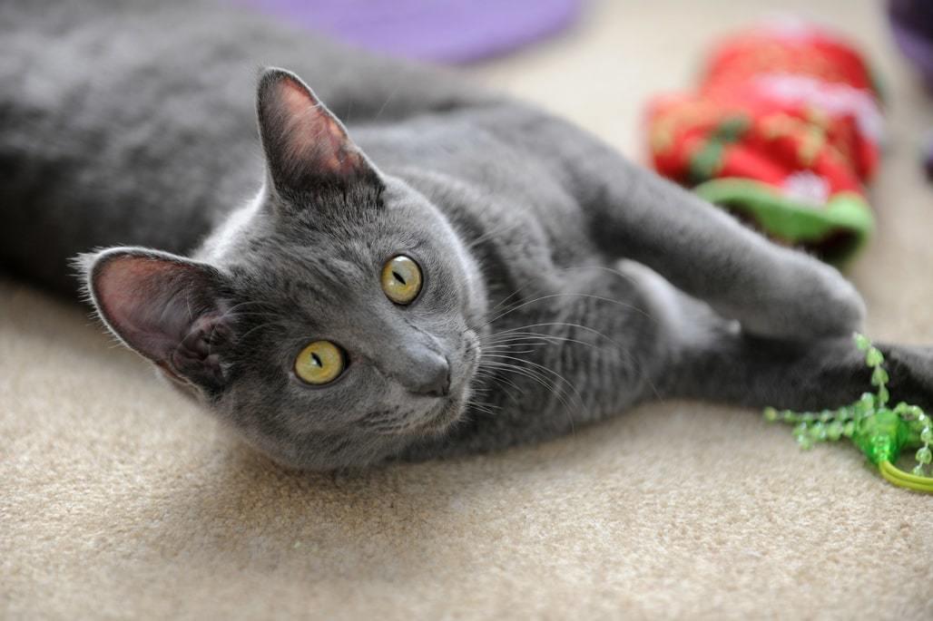 I migliori giochi per gatti - foto di un gatto che gioca