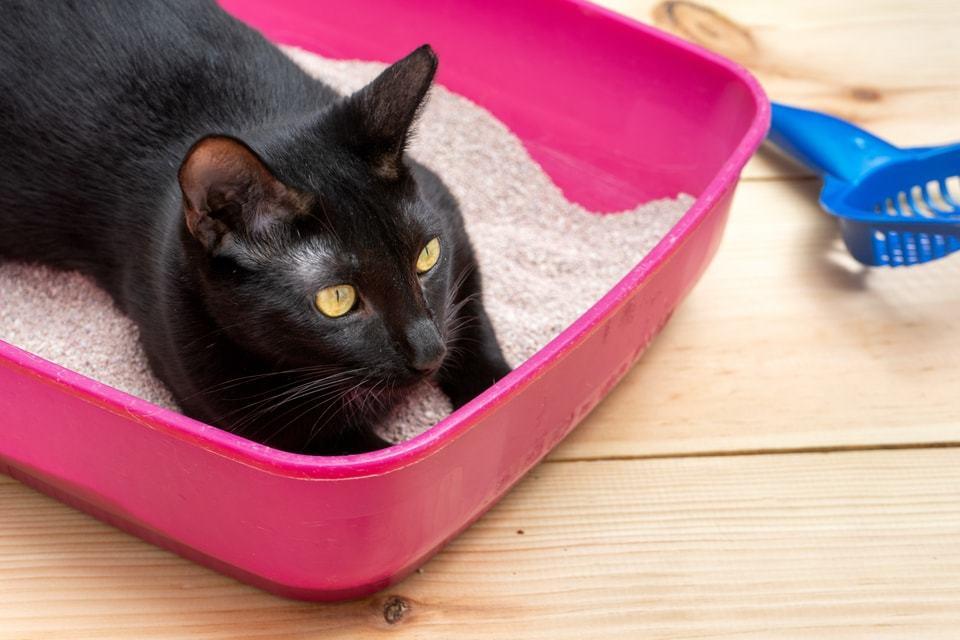 lettiera agglomerante per gatti