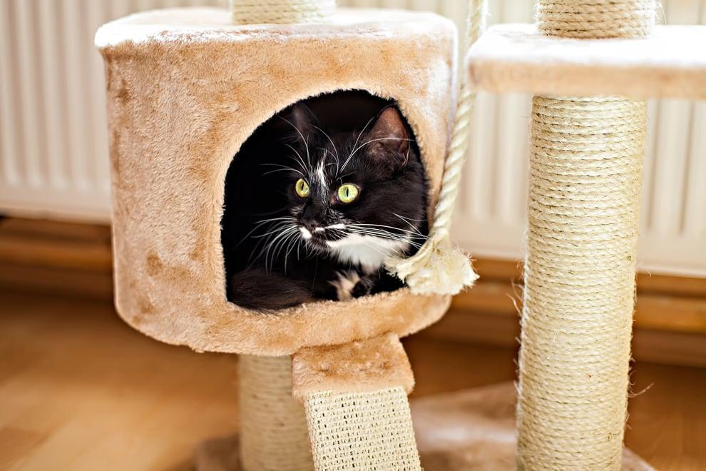 vuoi prendere un gatto? Ti serve un tiragraffi per gatti