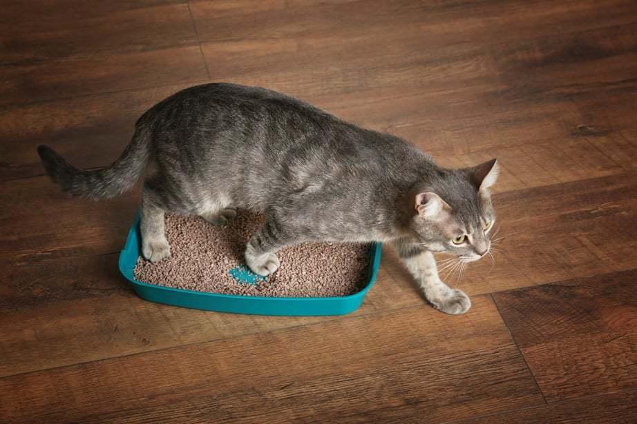 come scegliere la miglior lettiera agglomerante per gatti