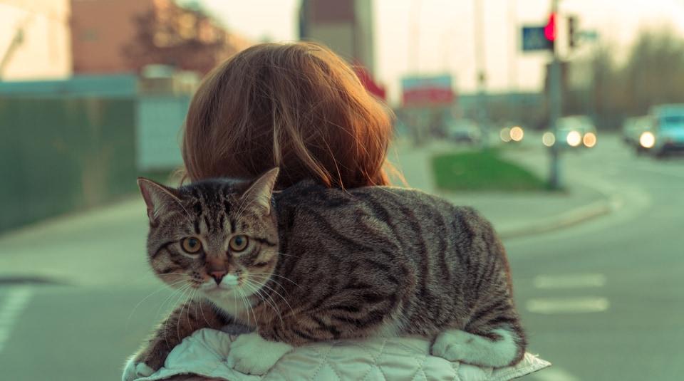 portare il gatto fuori al guinzaglio