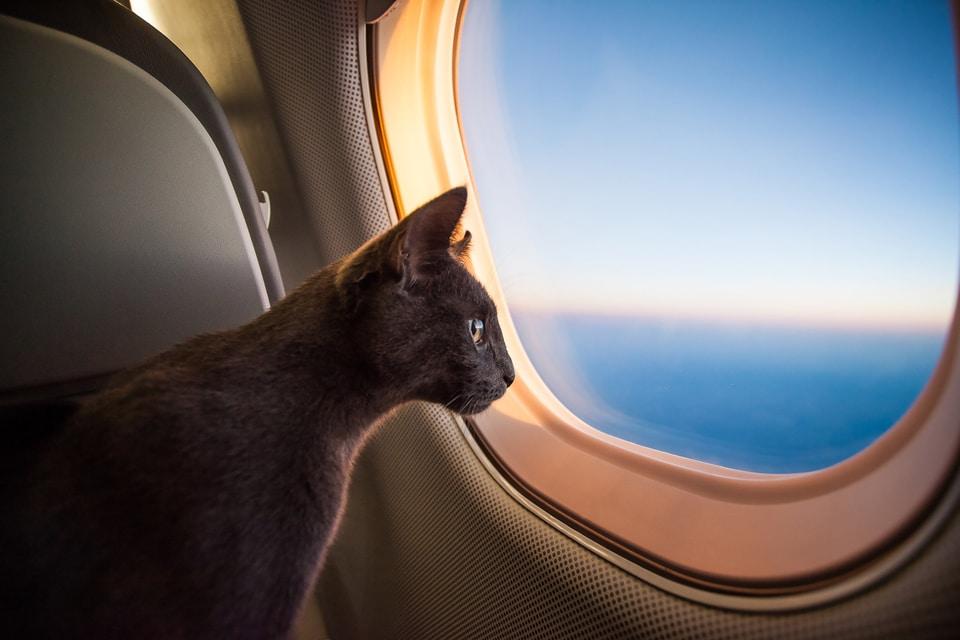 portare il gatto in vacanza o lasciarlo a casa