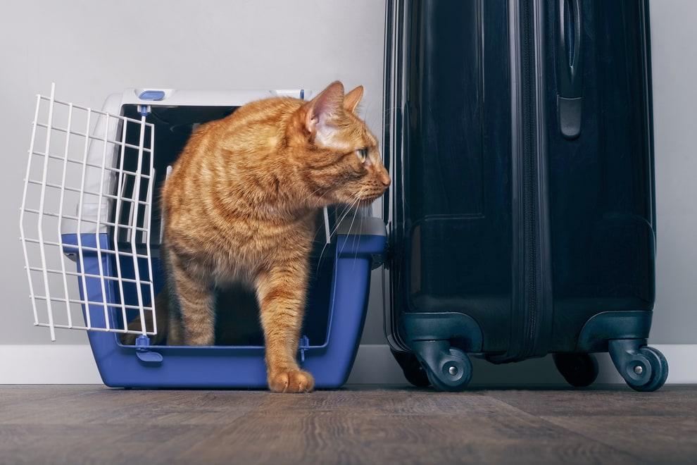 portare il gatto in vacanza, alcuni consigli