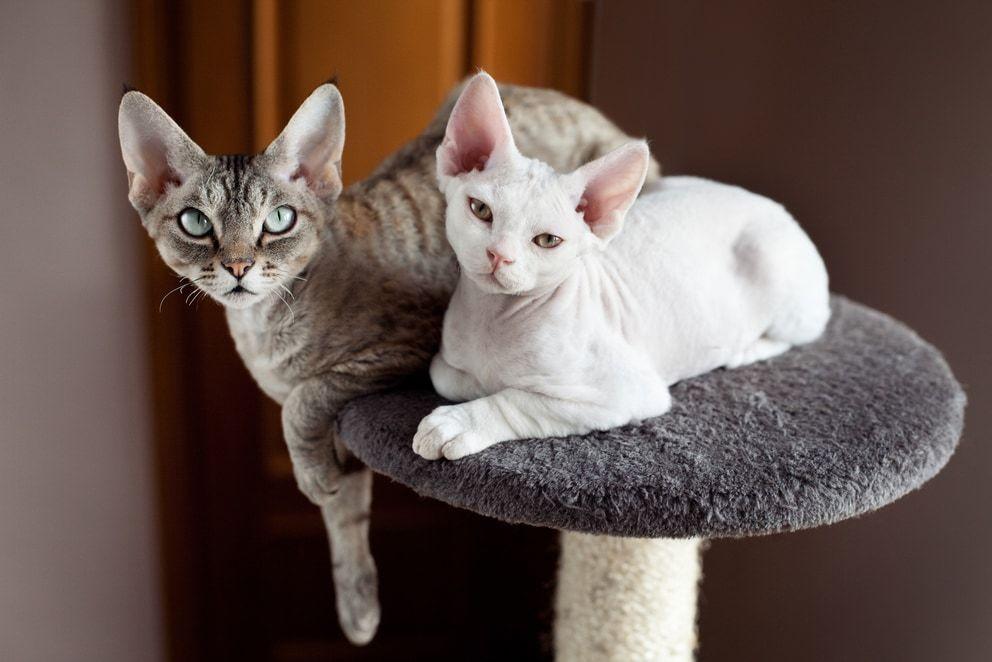 tiragraffi economici per gatti