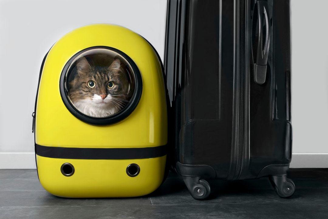 recensioni dei migliori trasportini per gatti