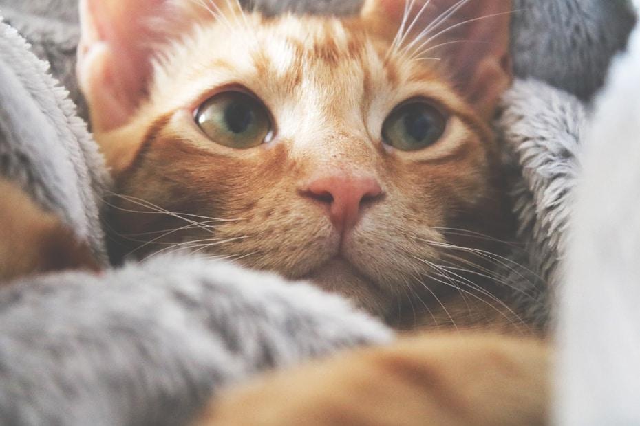 come allungare la vita al gatto