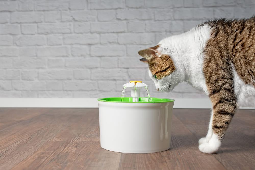 miglior fontanella per gatti