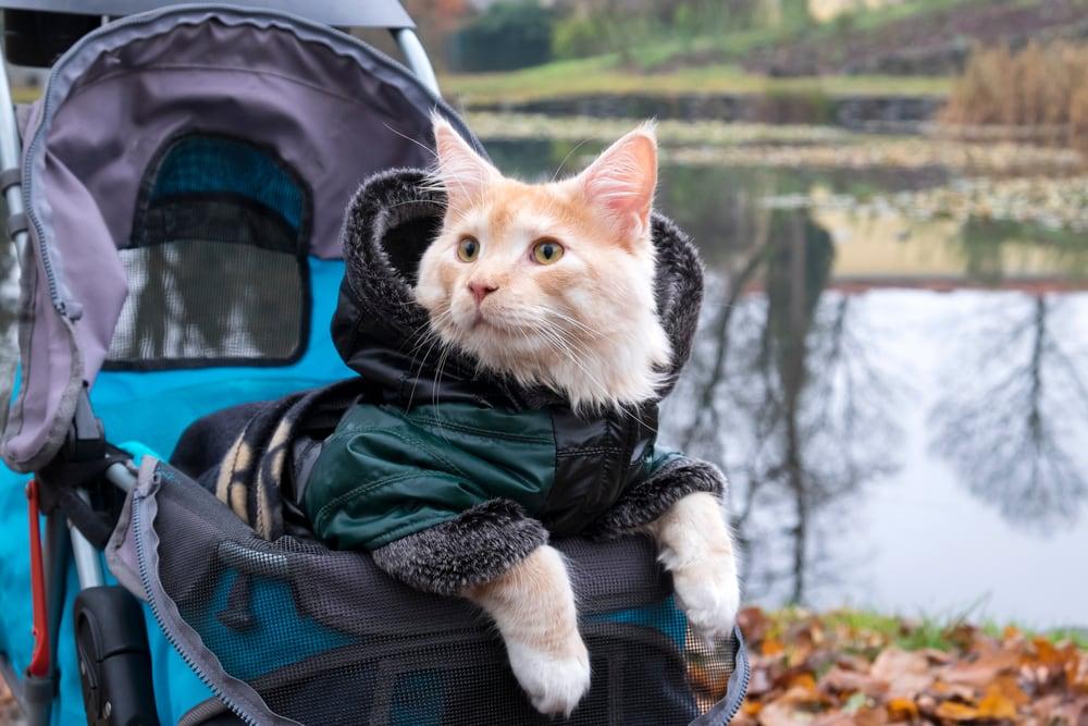 miglior passeggino per gatti
