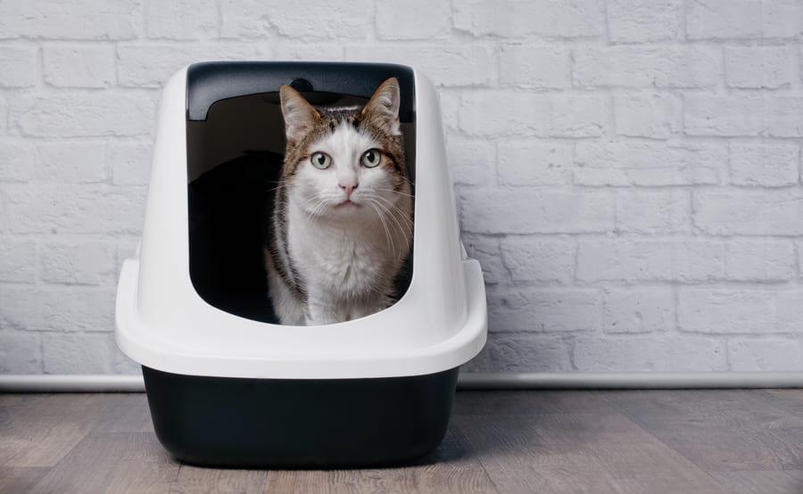 Lettiera Chiusa Per Gatti: Come Scegliere La Migliore (addio odori)