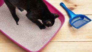 rimuovere gli odori dalla lettiera per gatto