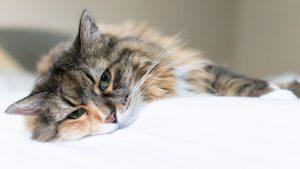 gatto triste o depresso