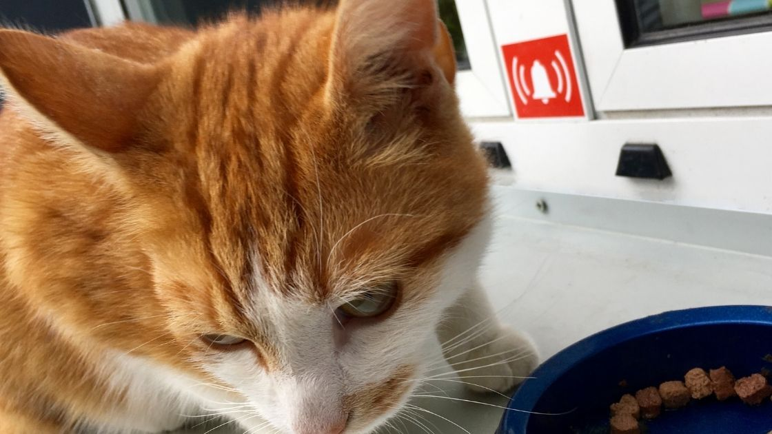 Inappetenza o fame esagerata è sintomo di un gatto stressato