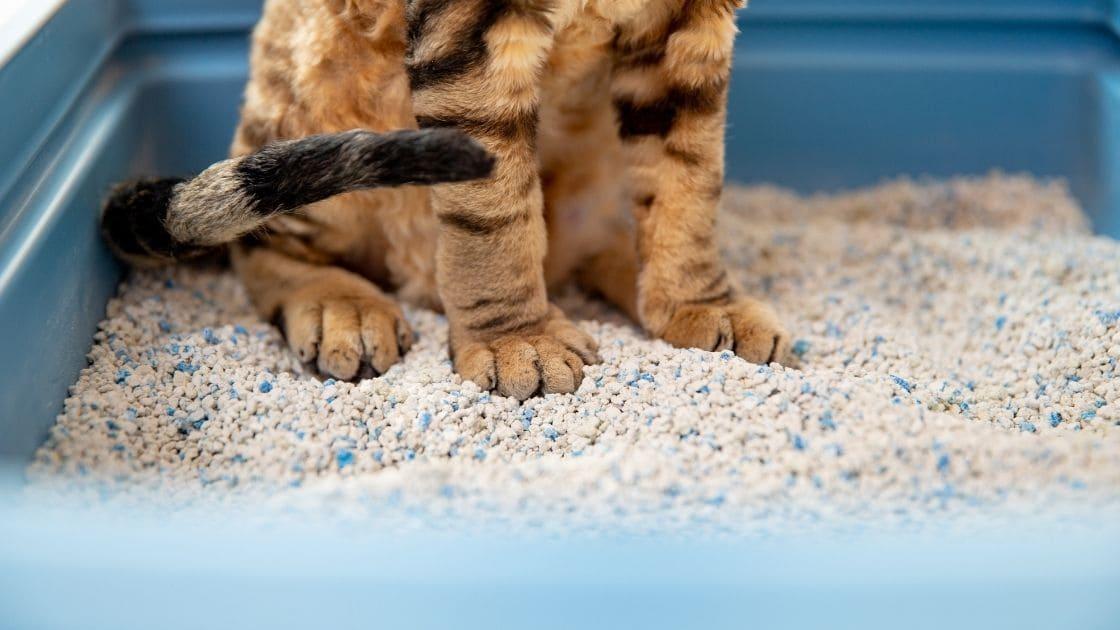 come e dove smaltire lettiera gatto