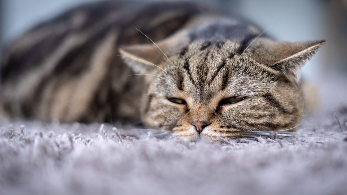 il gatto o gattino rifiuta i croccantini perché non sta bene